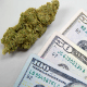 4 Crucial Points On How To Invest In Weed Stocks